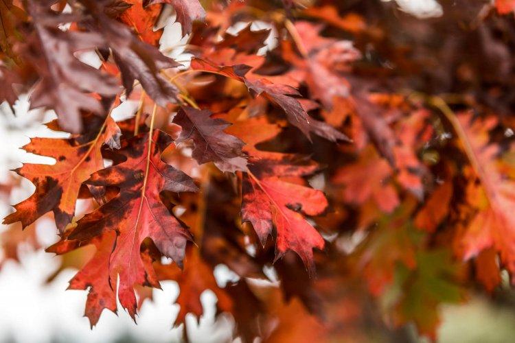Richmond Village in Autumn